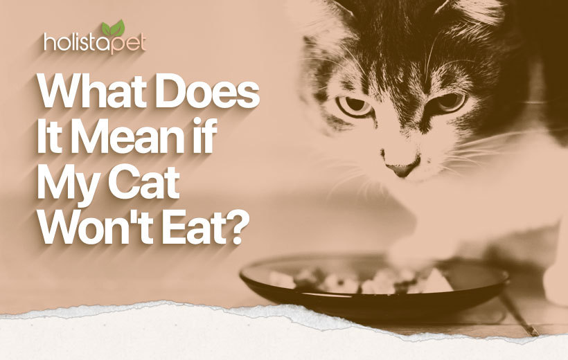 why is my cat not eating featured blog image