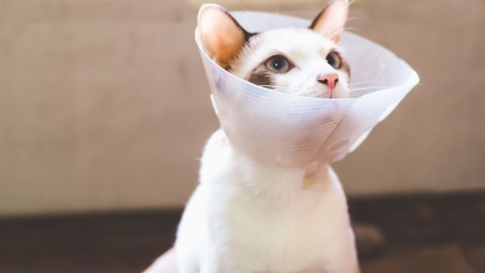 a kitten with a cone on