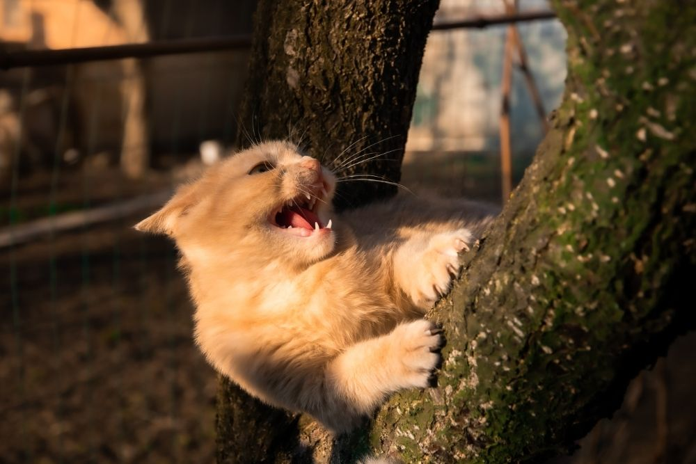 feline climbing a tree while angry
