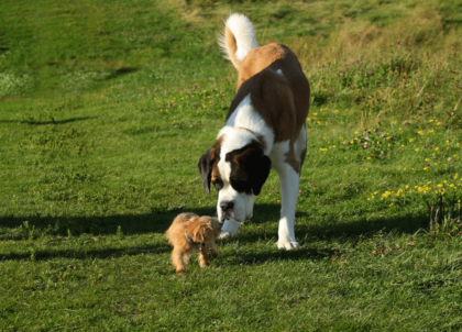 adult dog with a small pup in a park