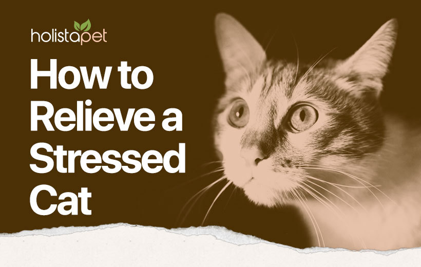cat stress featured blog image