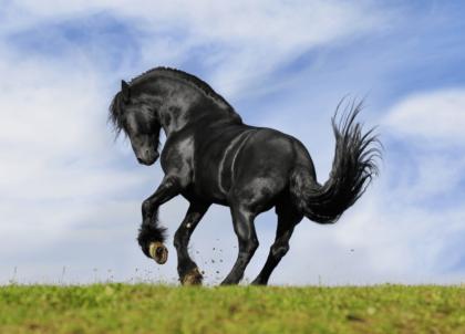 do horses need shoes