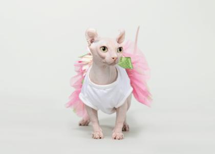 hairless feline posing in a cute pink skirt