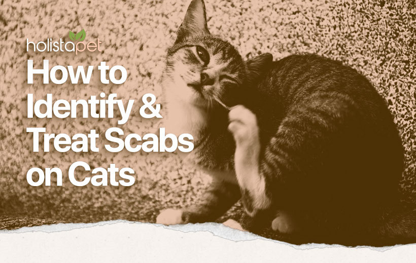 home remedies for cat scabs featured blog image
