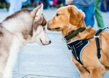 two pups meeting in plaza