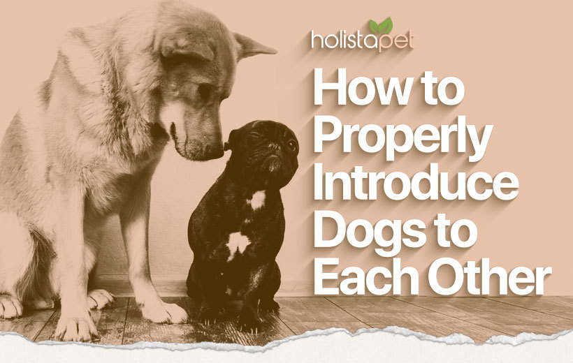 introducing dogs featured image