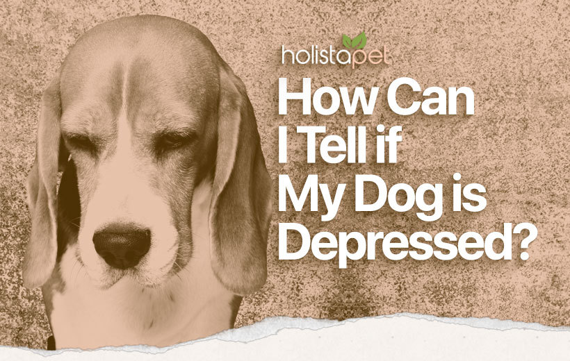 is my dog depressed featured blog image