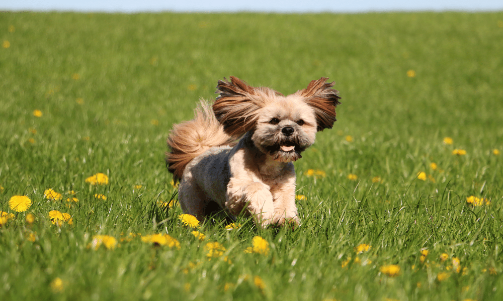 enthusiastic dog running through lush grass and flowers