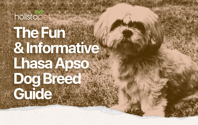 Lhasa Apso Dog Breed featured blog image