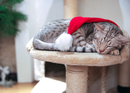kitten sleeping with a santa hat on