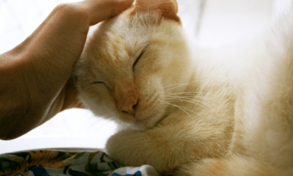 comforting a cat that has cat scabs