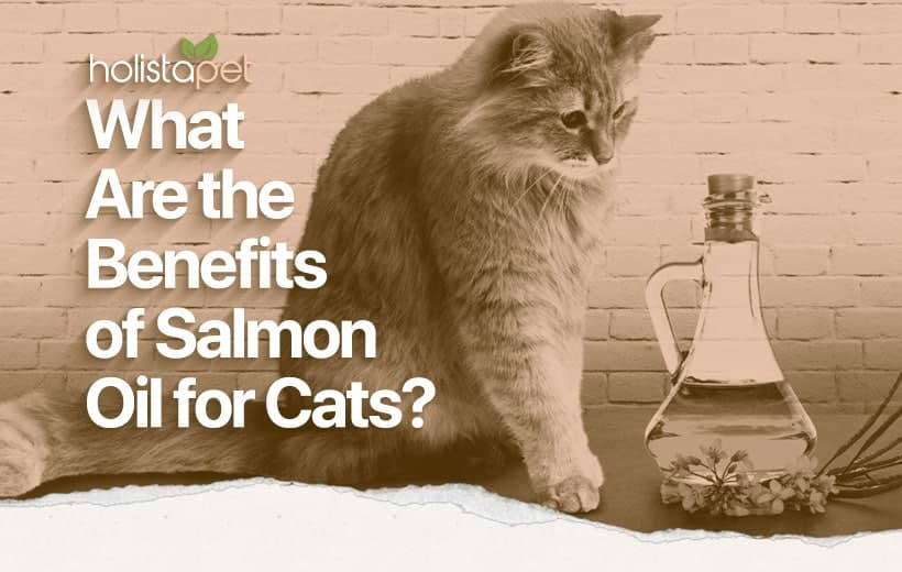 salmon oil for cats featured blog image