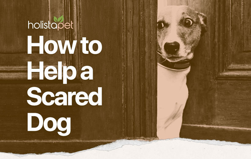 scared dog featured blog image