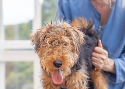 welsh terrier dog health check