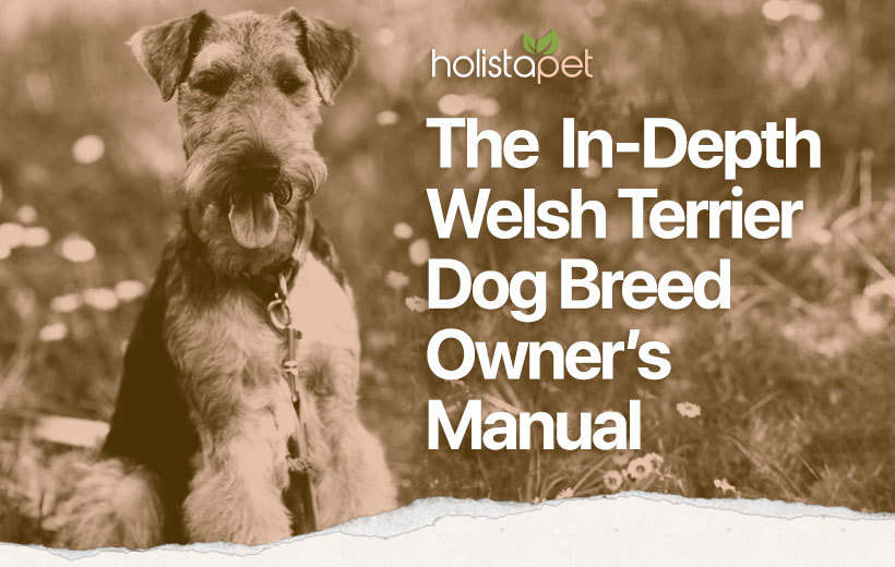 welsh terrier dog breed featured blog image