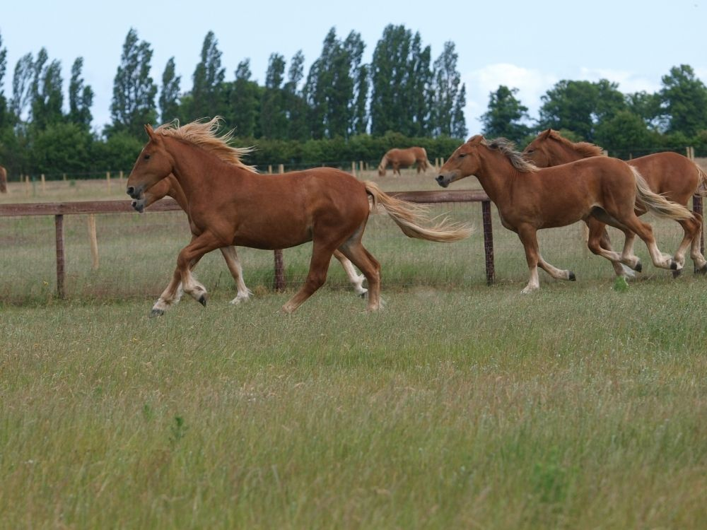 a group of horses running outside