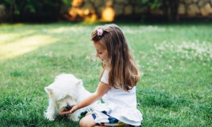 young girl feeding a puppy on green grass