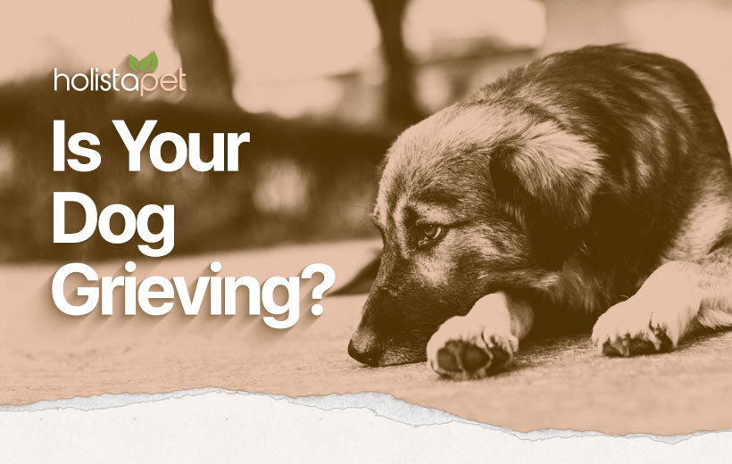 do dogs grieve? featured image