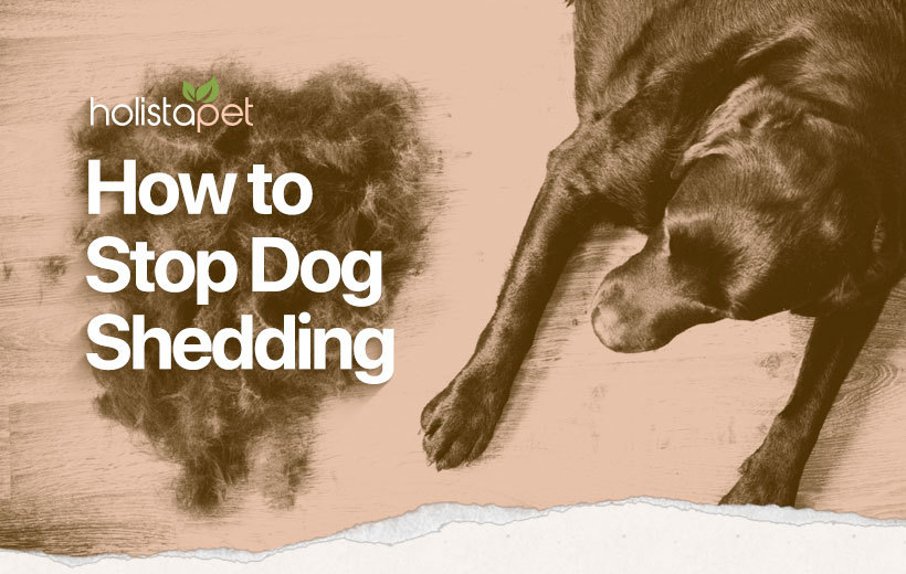 how to stop dog shedding feature