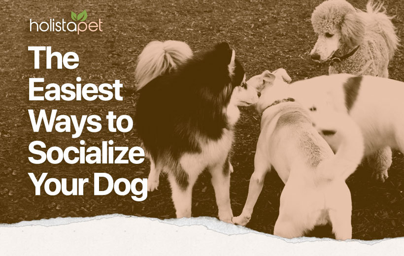 how to socialize a dog featured blog image