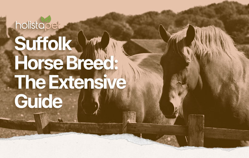 Suffolk Punch featured image for breed guide