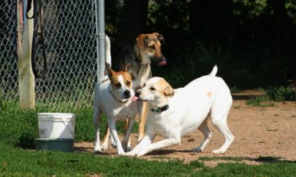 three dogs playing with each other at the park