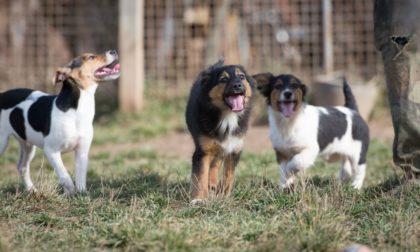 three happy dogs socializing at the dog park