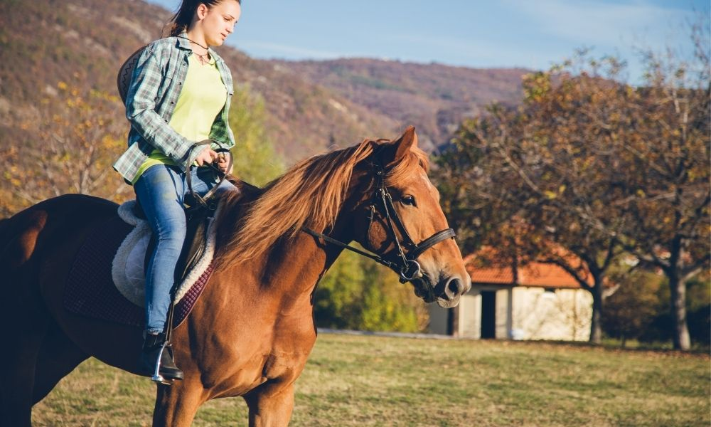 refining the gait of a tennessee walking horse
