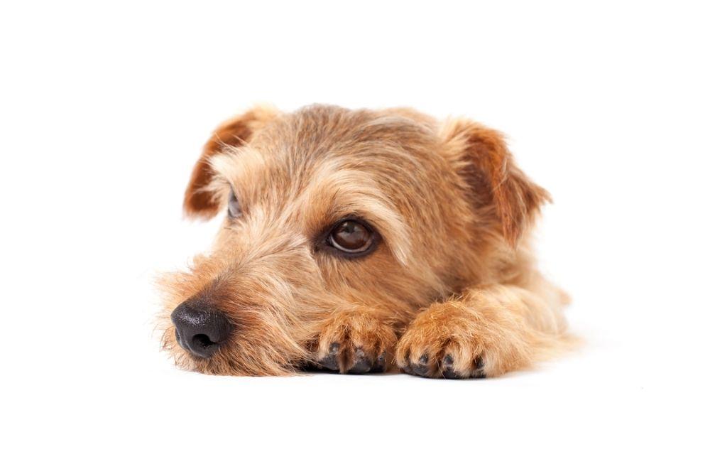 a resting pup