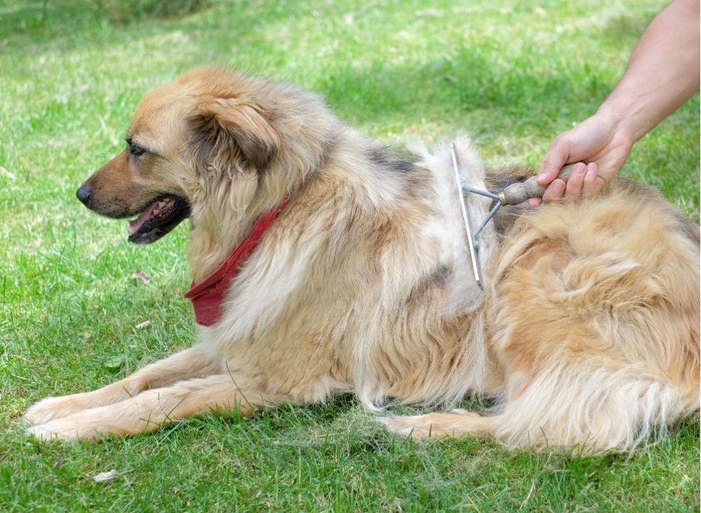 brushing a dog's fur