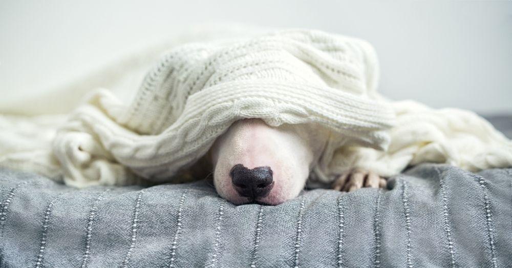 a hiding dog