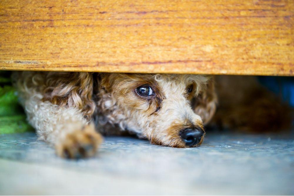 a puppy hiding