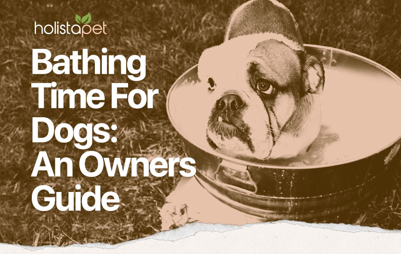 the best tips on how to bathe a dog featured blog image