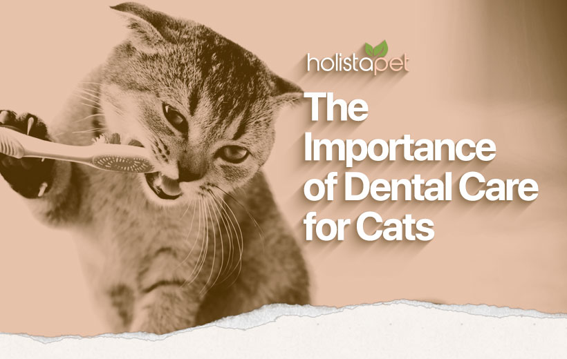 cat dental care featured image