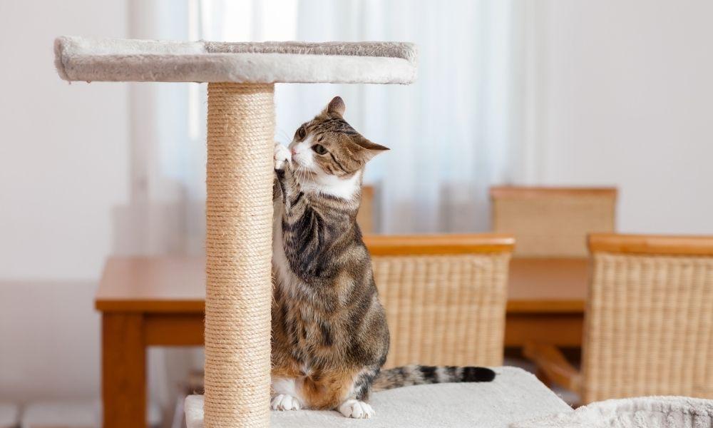 a cat using a scratching post