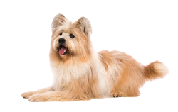 Dog Breed Elo