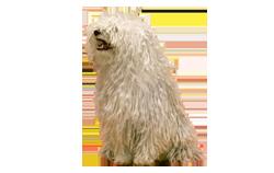Dog Breed Komondor