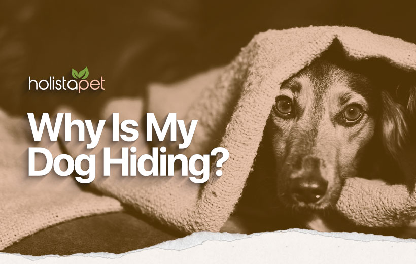 why is my dog hiding featured blog image