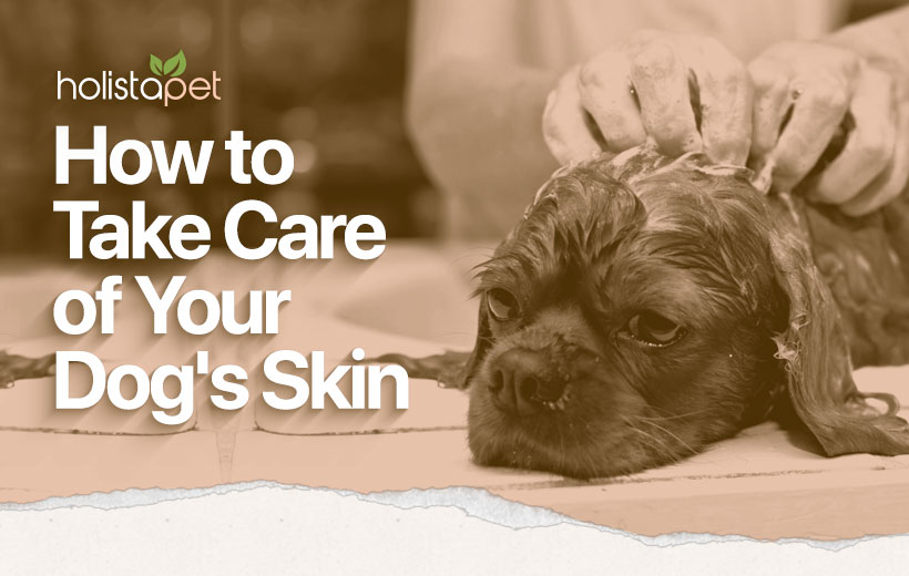 "a dog getting washed with text ""how to take care of your dog's skin"""