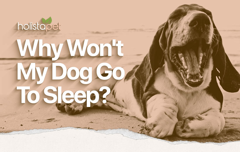 "a hound dog yawning with the text ""why won't my dog go to sleep?"""