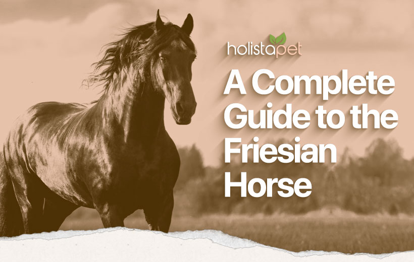 "a black horse with text ""a complete guide to the friesian horse"""