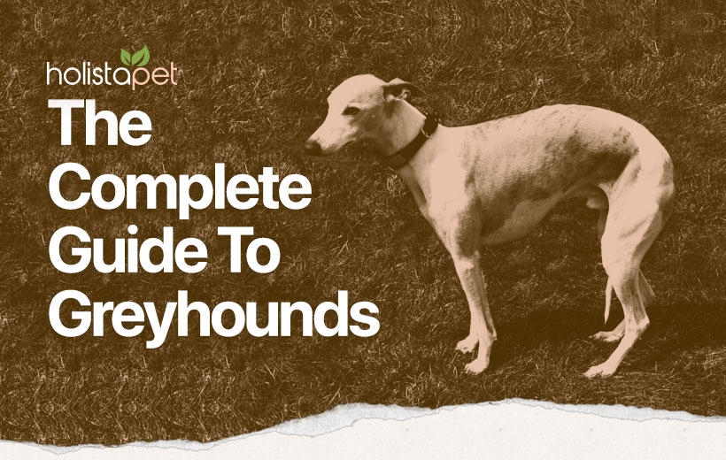 a guide to the greyhound dog featured blog image