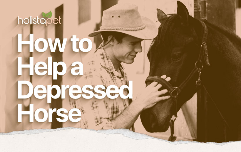 "a man petting a black horse with the text ""how to help a depressed horse"""