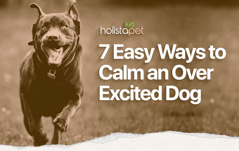 calm an over excited dog featured blog image