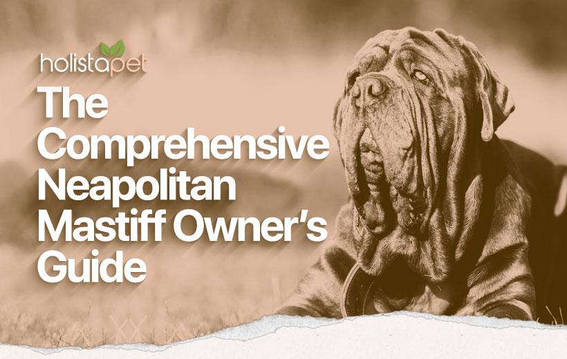 Neapolitan Mastiff Dog Breed Featured Blog Image