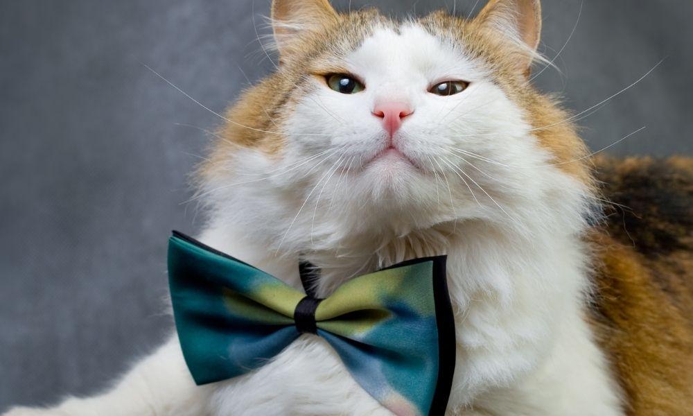 a cute cat wearing a green bowtie