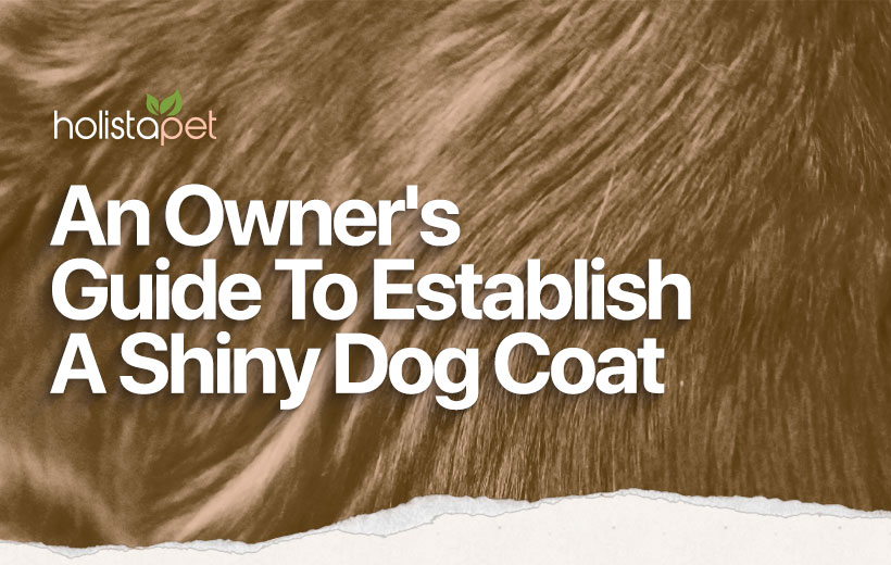 An Owner's Guide To Establish A Shiny Dog Coat