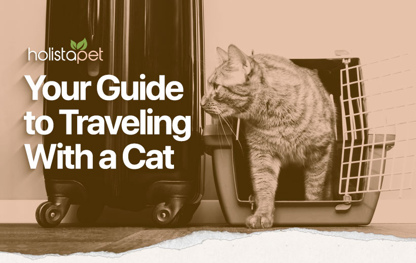 """a cat walking out of a carrier with the text """"your guide to traveling with a cat"""""""
