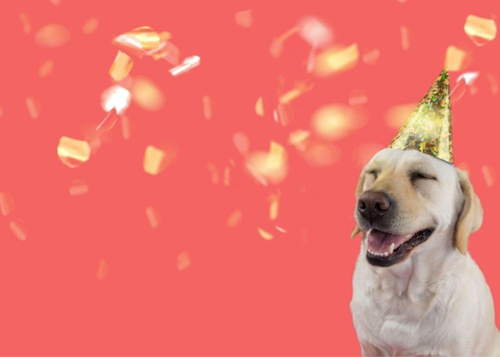 dog celebrating
