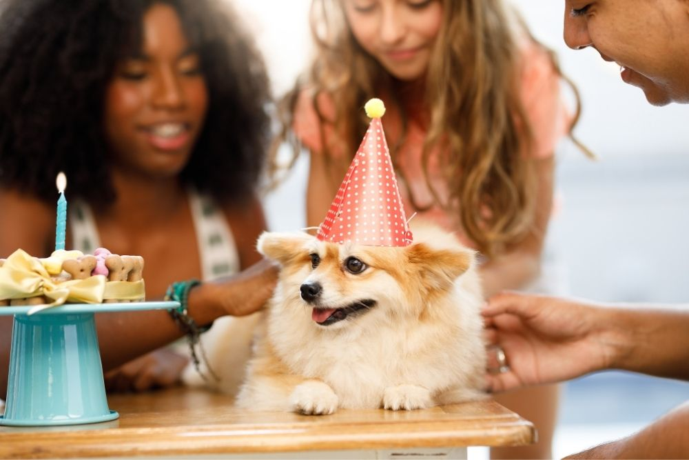 Celebrating with your canine